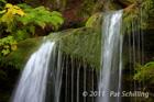 Fern Falls Closeup