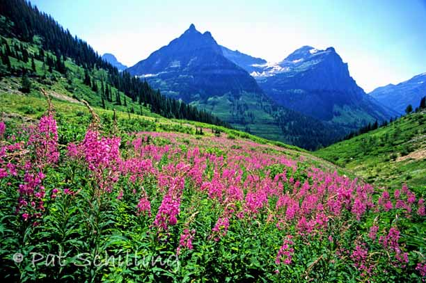 Noxious Pacific Northwest Wildflowers - Yahoo! Voices - voices