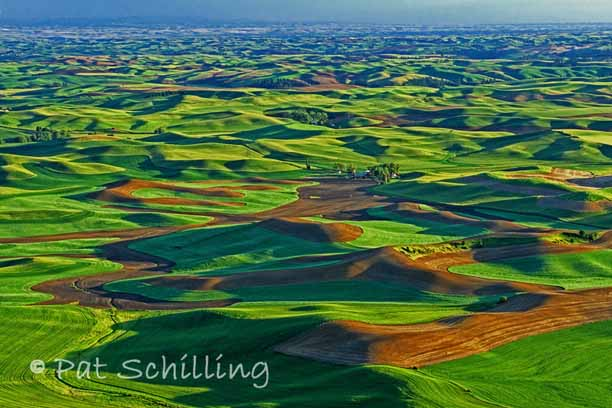 Curves on the Palouse