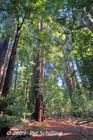 John Muir Forest