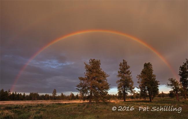 Turnbull Rainbow