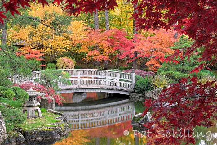 Autumn in the Garden 2