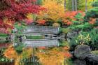 Garden Bridge Reflection