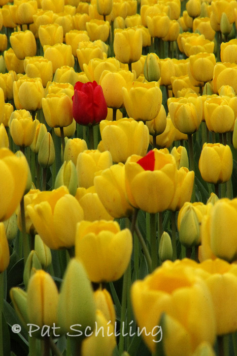 Alone Against Yellow