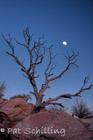 Dead Horse Moonrise